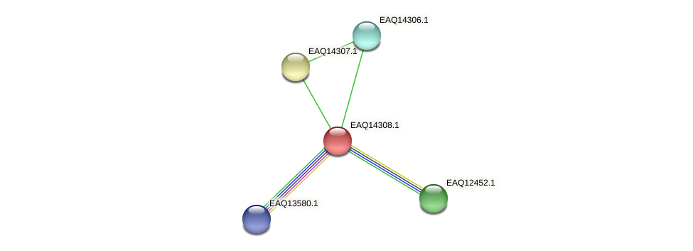 RB2654_16601 protein (Maritimibacter alkaliphilus) - STRING interaction network