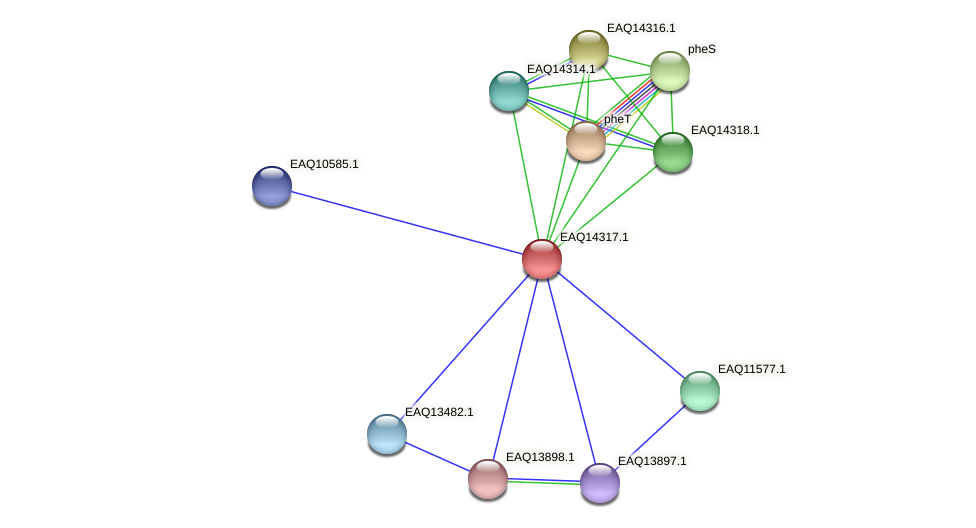 RB2654_16646 protein (Maritimibacter alkaliphilus) - STRING interaction network