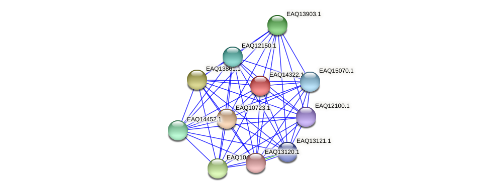 RB2654_16671 protein (Maritimibacter alkaliphilus) - STRING interaction network