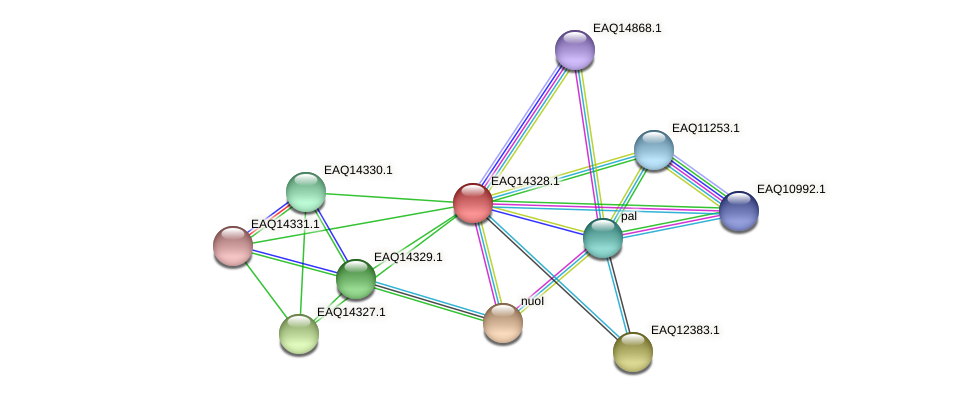RB2654_16701 protein (Maritimibacter alkaliphilus) - STRING interaction network