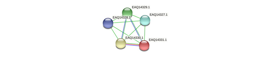 RB2654_16716 protein (Maritimibacter alkaliphilus) - STRING interaction network