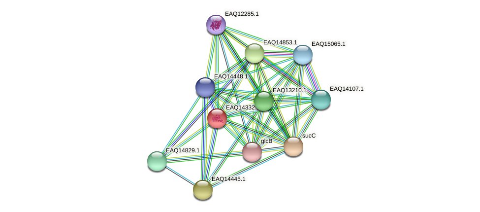 RB2654_16721 protein (Maritimibacter alkaliphilus) - STRING interaction network
