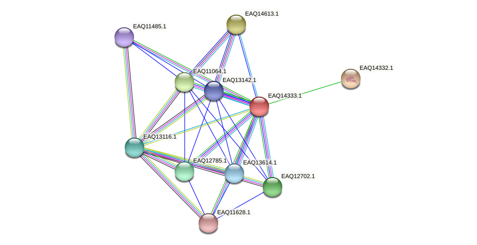 RB2654_16726 protein (Maritimibacter alkaliphilus) - STRING interaction network