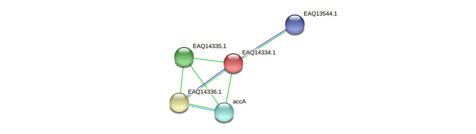 RB2654_16731 protein (Maritimibacter alkaliphilus) - STRING interaction network