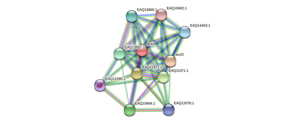 accA protein (Maritimibacter alkaliphilus) - STRING interaction network