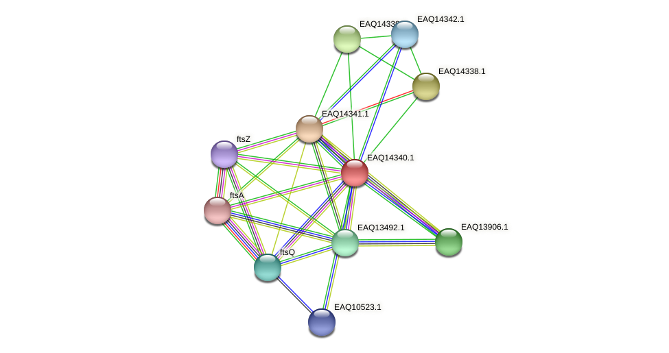 RB2654_16761 protein (Maritimibacter alkaliphilus) - STRING interaction network