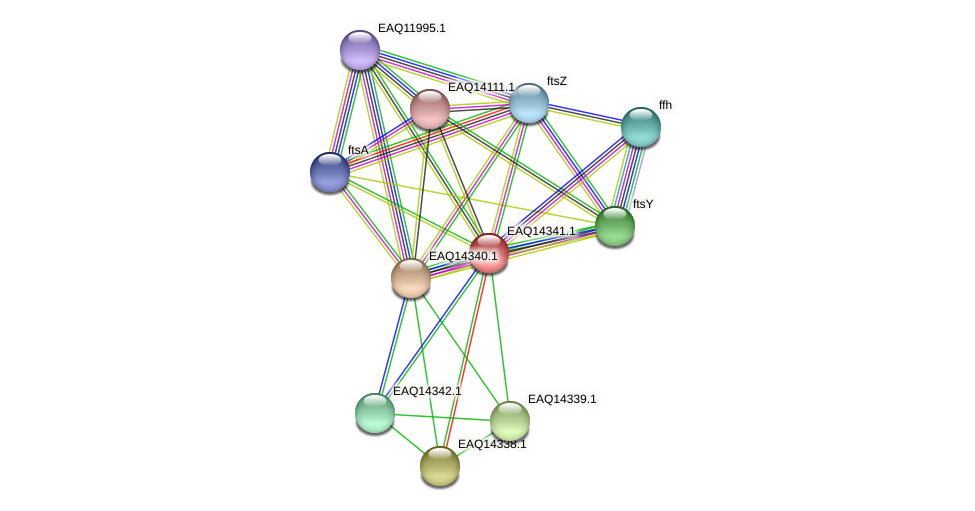 RB2654_16766 protein (Maritimibacter alkaliphilus) - STRING interaction network