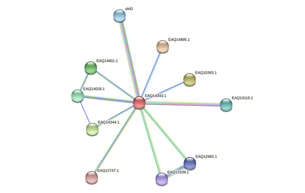 RB2654_16776 protein (Maritimibacter alkaliphilus) - STRING interaction network
