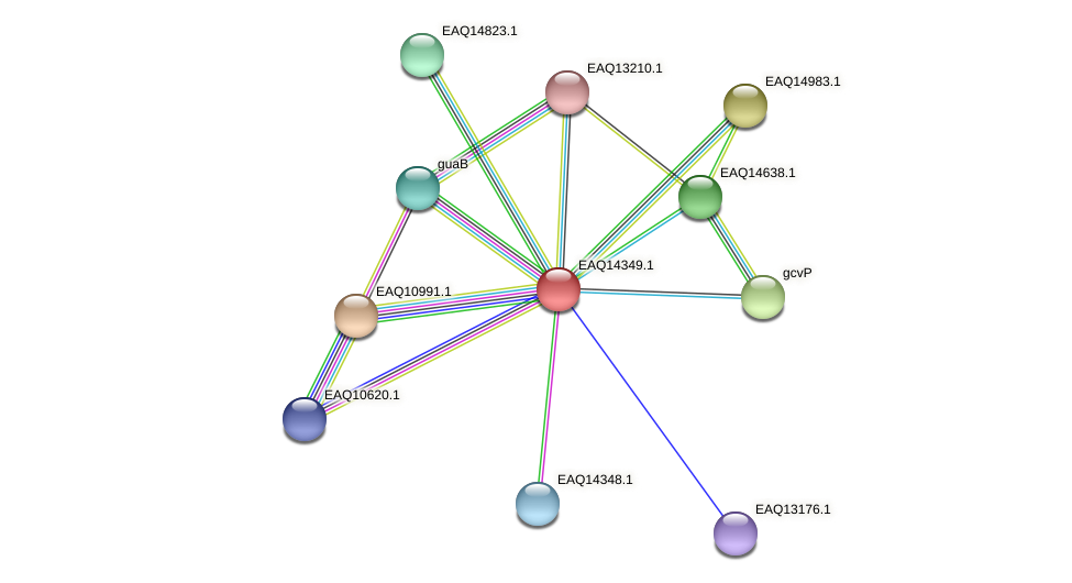 RB2654_16806 protein (Maritimibacter alkaliphilus) - STRING interaction network