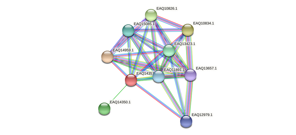 RB2654_16816 protein (Maritimibacter alkaliphilus) - STRING interaction network