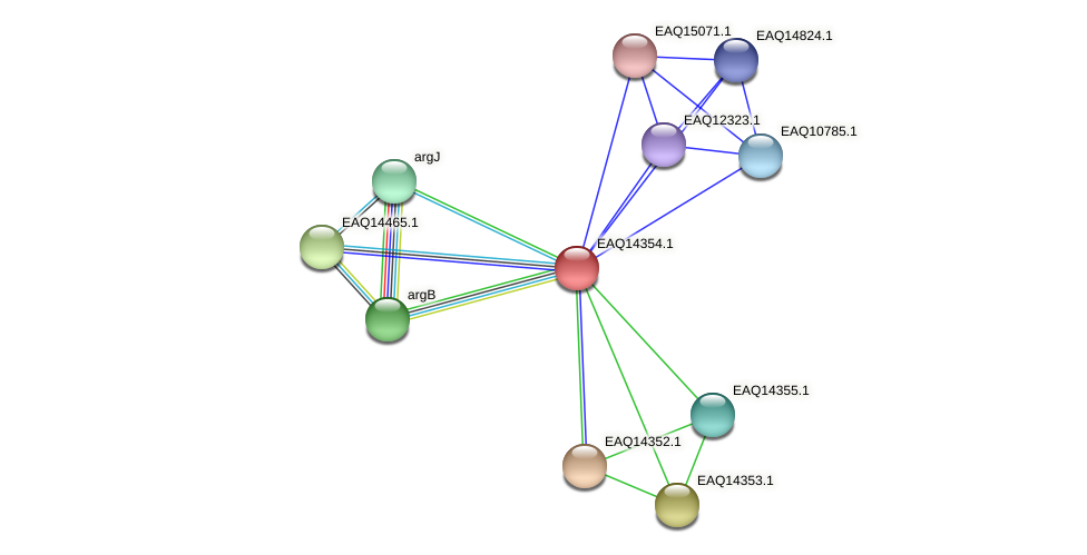 RB2654_16831 protein (Maritimibacter alkaliphilus) - STRING interaction network