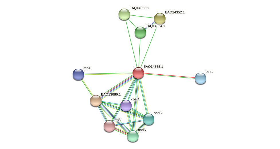 RB2654_16836 protein (Maritimibacter alkaliphilus) - STRING interaction network
