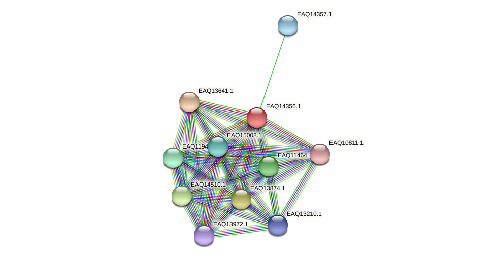 RB2654_16841 protein (Maritimibacter alkaliphilus) - STRING interaction network