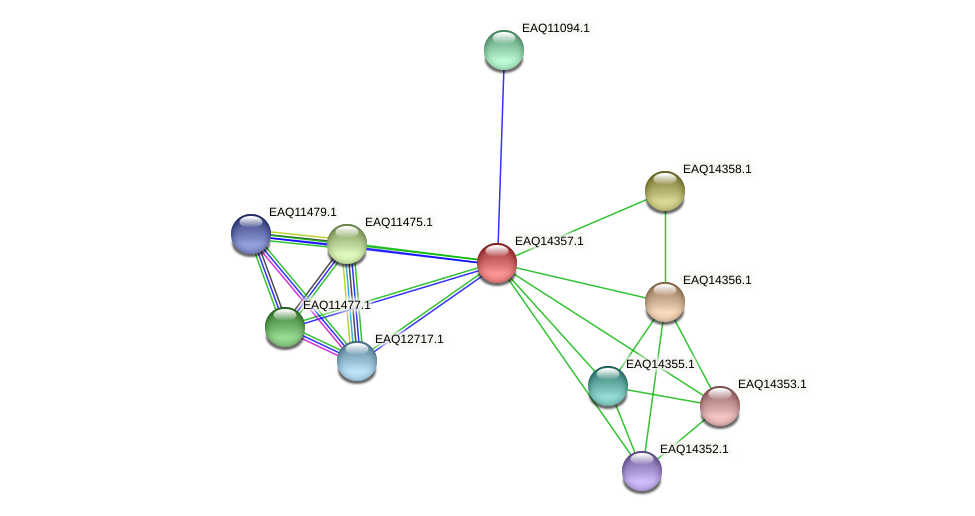 RB2654_16846 protein (Maritimibacter alkaliphilus) - STRING interaction network