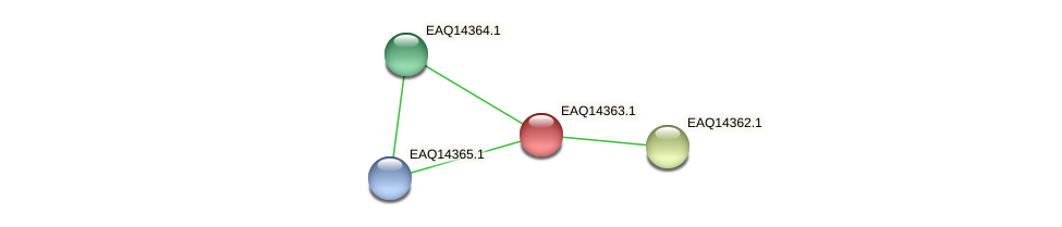 RB2654_16876 protein (Maritimibacter alkaliphilus) - STRING interaction network