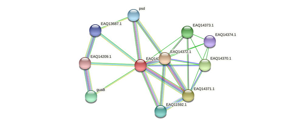 RB2654_16906 protein (Maritimibacter alkaliphilus) - STRING interaction network