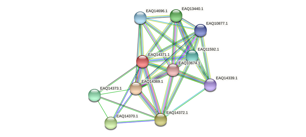 RB2654_16916 protein (Maritimibacter alkaliphilus) - STRING interaction network