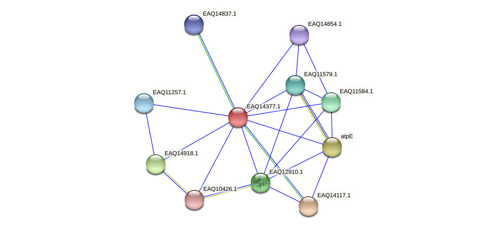RB2654_16946 protein (Maritimibacter alkaliphilus) - STRING interaction network