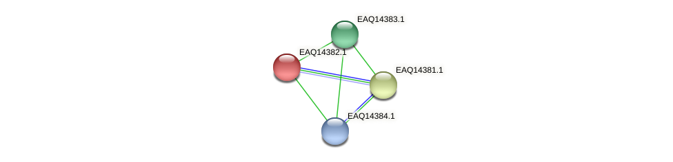 RB2654_16971 protein (Maritimibacter alkaliphilus) - STRING interaction network