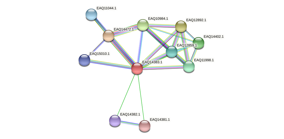 RB2654_16976 protein (Maritimibacter alkaliphilus) - STRING interaction network