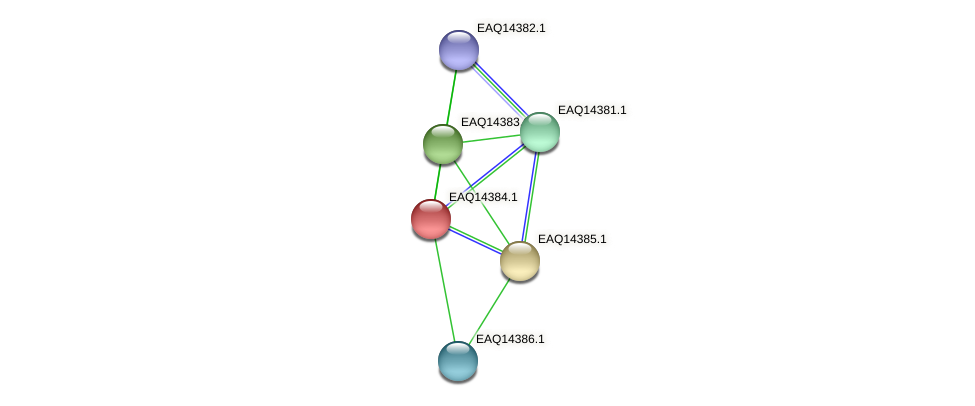 RB2654_16981 protein (Maritimibacter alkaliphilus) - STRING interaction network