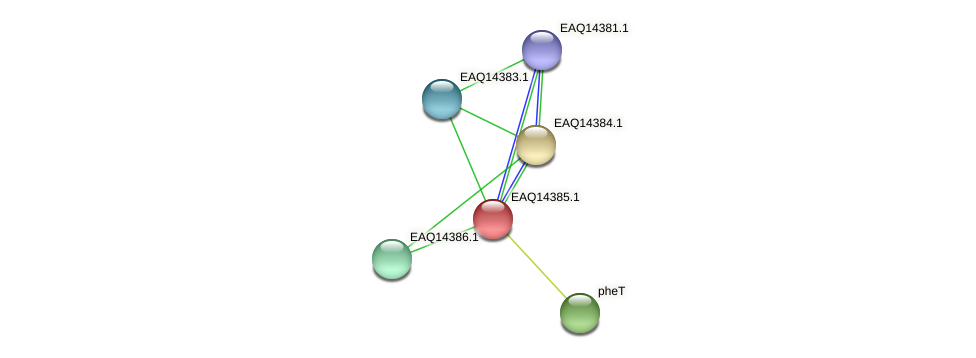 RB2654_16986 protein (Maritimibacter alkaliphilus) - STRING interaction network