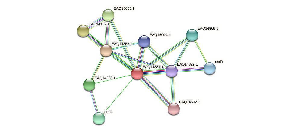 RB2654_16996 protein (Maritimibacter alkaliphilus) - STRING interaction network