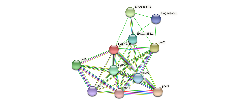 RB2654_17001 protein (Maritimibacter alkaliphilus) - STRING interaction network