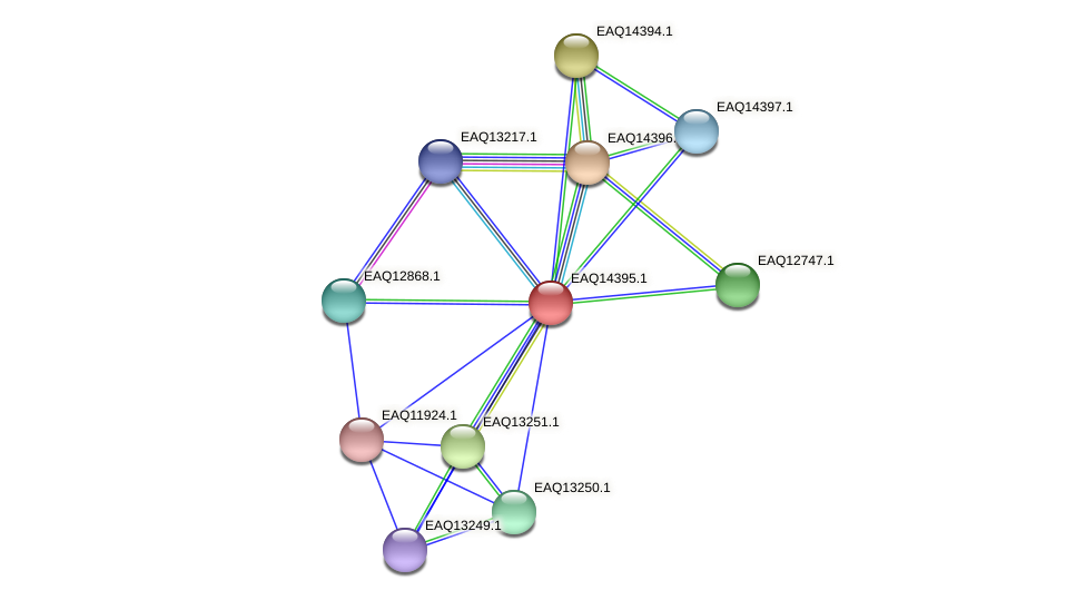 RB2654_17036 protein (Maritimibacter alkaliphilus) - STRING interaction network