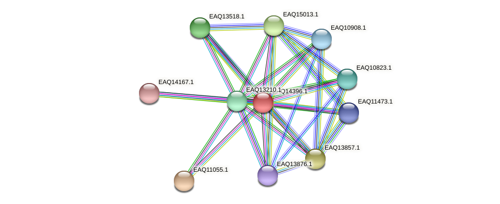 RB2654_17041 protein (Maritimibacter alkaliphilus) - STRING interaction network