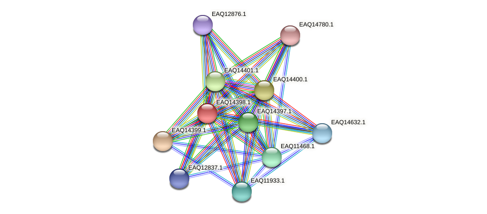 RB2654_17051 protein (Maritimibacter alkaliphilus) - STRING interaction network