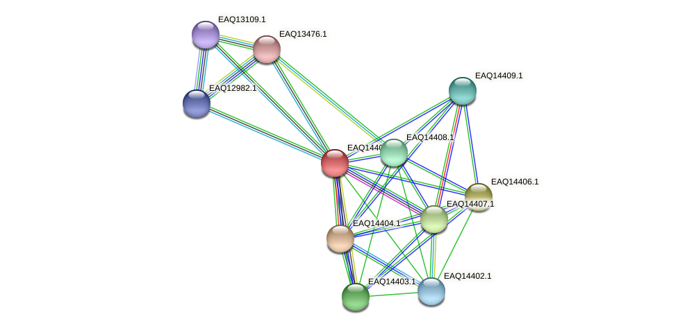 RB2654_17086 protein (Maritimibacter alkaliphilus) - STRING interaction network