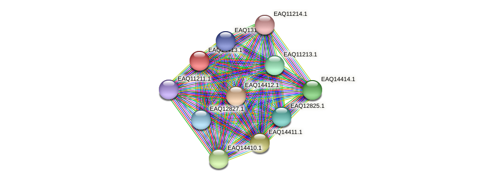 RB2654_17126 protein (Maritimibacter alkaliphilus) - STRING interaction network