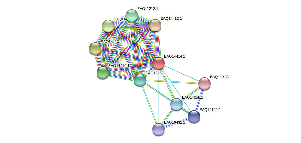 RB2654_17131 protein (Maritimibacter alkaliphilus) - STRING interaction network