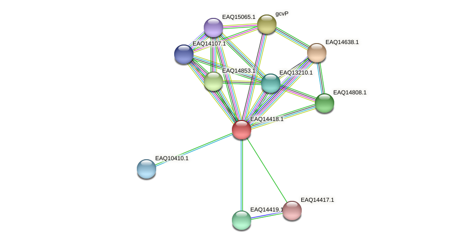 RB2654_17151 protein (Maritimibacter alkaliphilus) - STRING interaction network