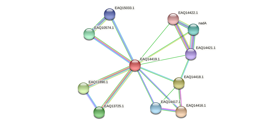 RB2654_17156 protein (Maritimibacter alkaliphilus) - STRING interaction network