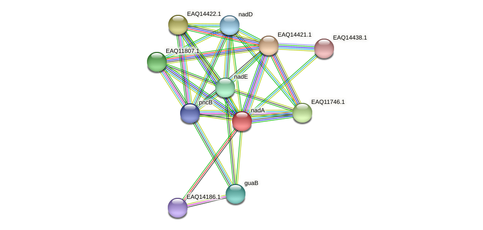 nadA protein (Maritimibacter alkaliphilus) - STRING interaction network