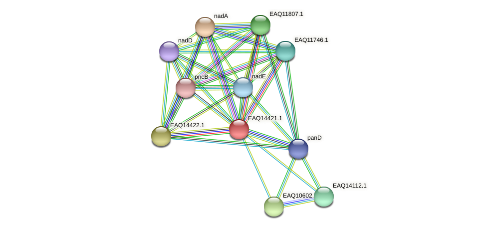 RB2654_17166 protein (Maritimibacter alkaliphilus) - STRING interaction network
