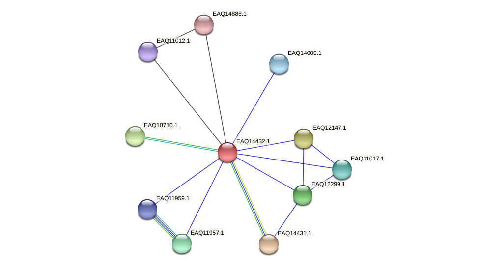 RB2654_17221 protein (Maritimibacter alkaliphilus) - STRING interaction network