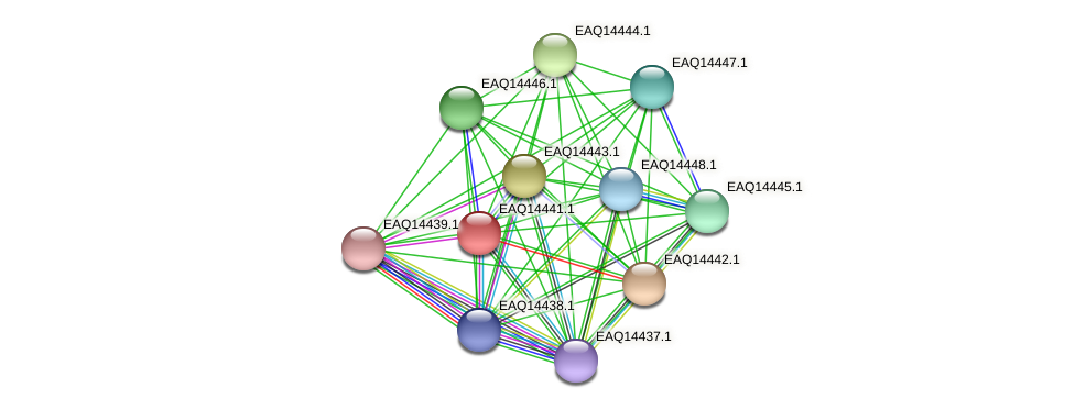 RB2654_17266 protein (Maritimibacter alkaliphilus) - STRING interaction network