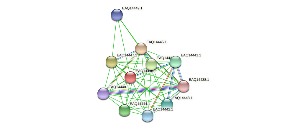 RB2654_17291 protein (Maritimibacter alkaliphilus) - STRING interaction network