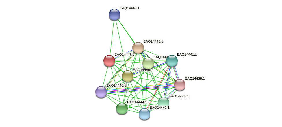 RB2654_17296 protein (Maritimibacter alkaliphilus) - STRING interaction network