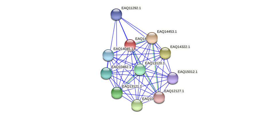RB2654_17321 protein (Maritimibacter alkaliphilus) - STRING interaction network