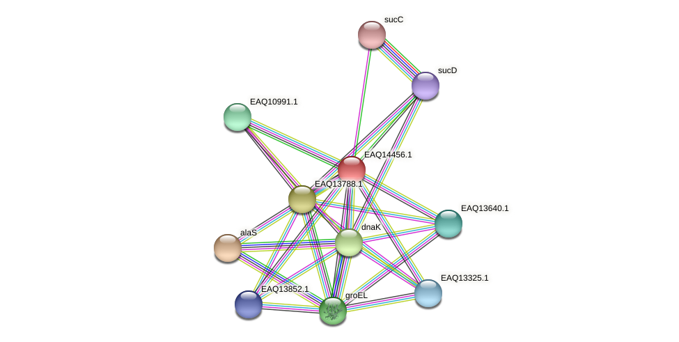 RB2654_17341 protein (Maritimibacter alkaliphilus) - STRING interaction network