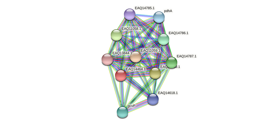 RB2654_17381 protein (Maritimibacter alkaliphilus) - STRING interaction network