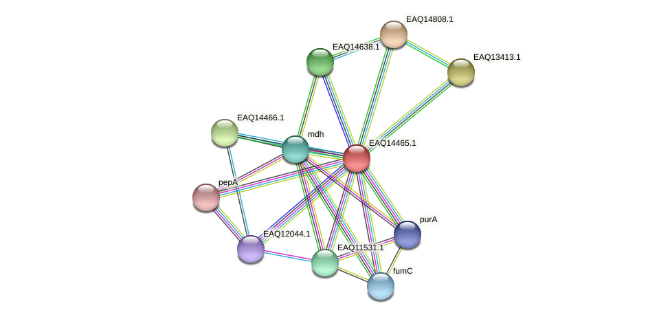 RB2654_17386 protein (Maritimibacter alkaliphilus) - STRING interaction network