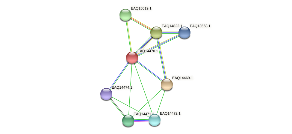 RB2654_17411 protein (Maritimibacter alkaliphilus) - STRING interaction network