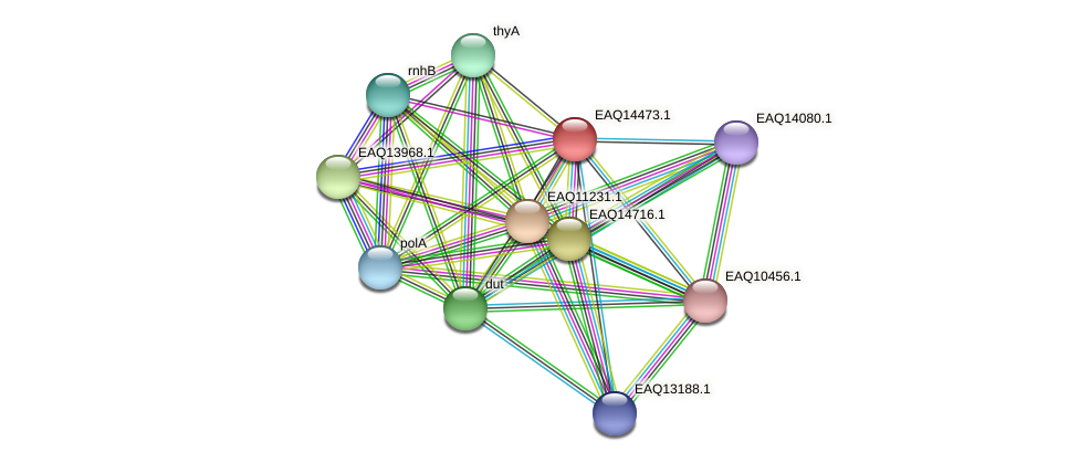 RB2654_17426 protein (Maritimibacter alkaliphilus) - STRING interaction network