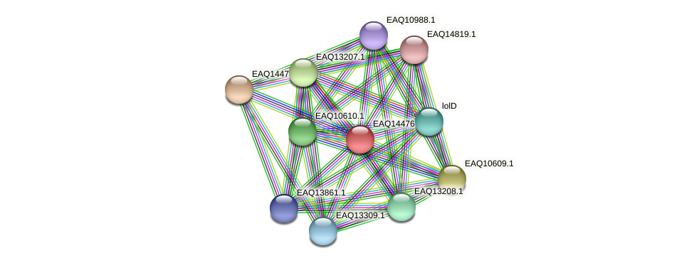 RB2654_17441 protein (Maritimibacter alkaliphilus) - STRING interaction network