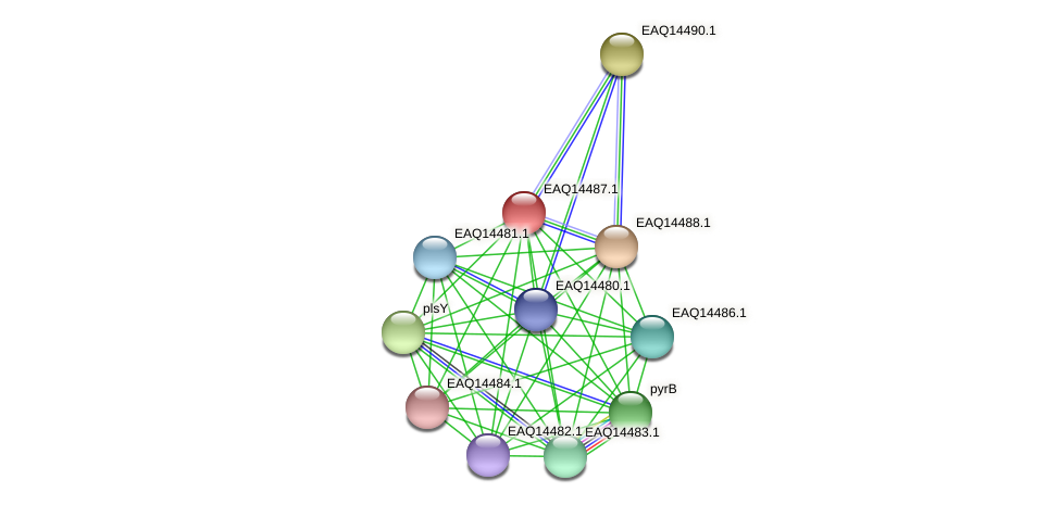 RB2654_17496 protein (Maritimibacter alkaliphilus) - STRING interaction network